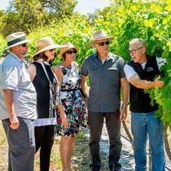 vineyard tours image