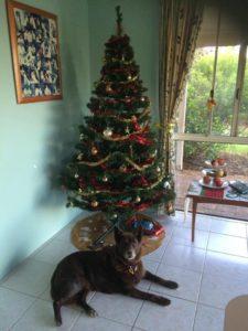 Jasper and Christmas Tree