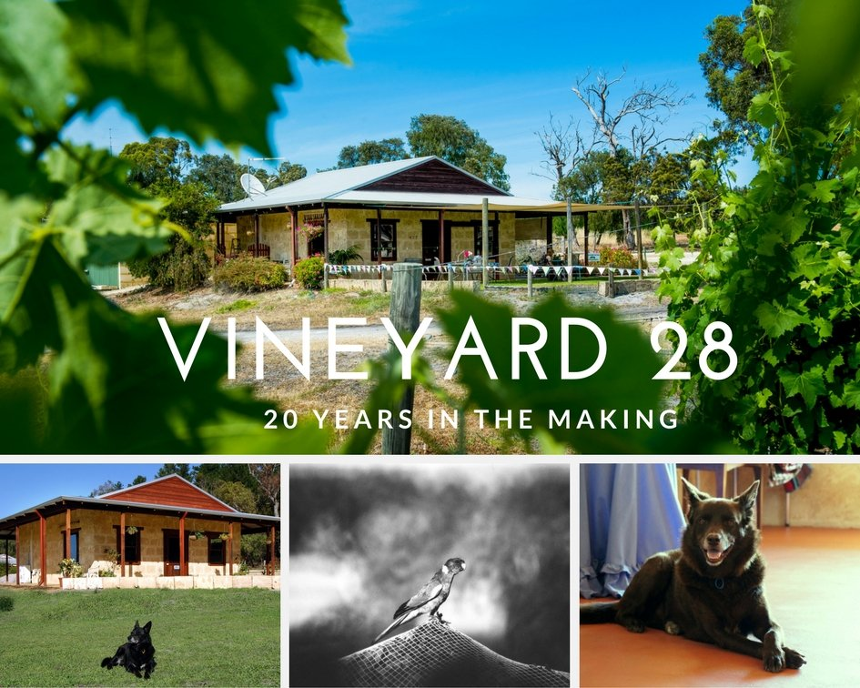Vineyard 28 Images