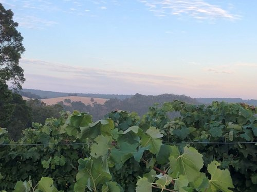 Dawn at Wildwater Vineyard