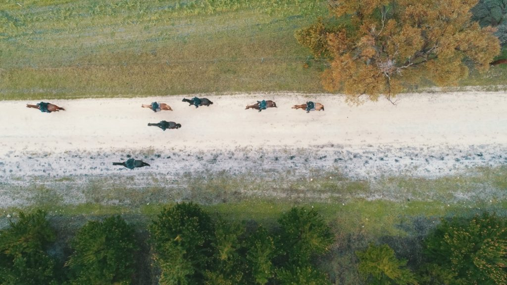 Horses on the 10th Lighthorse Bridle Trail