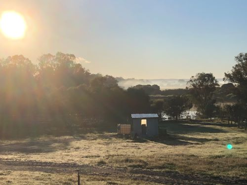 Winter morning in the Vineyard