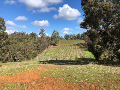 Wildwater Vineyard view