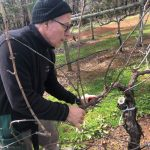Winemaker Mark Pruning
