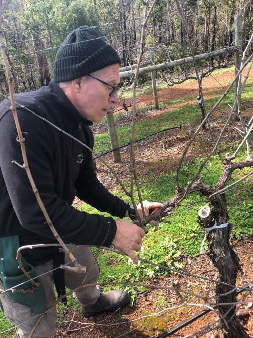 Winemaker Mark Pruning