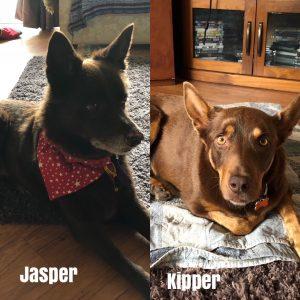 Jasper & Kipper